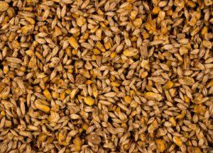 All Grain 12