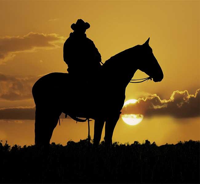 Celebrate Horse Feeds