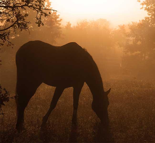 horses success