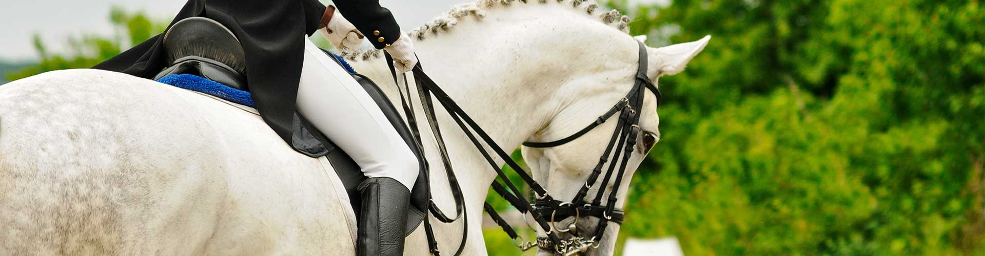 Grey White Dressage Horse