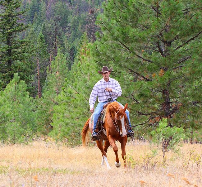 Celebration Horse Feeds: In Bags and Bulk - Celebration